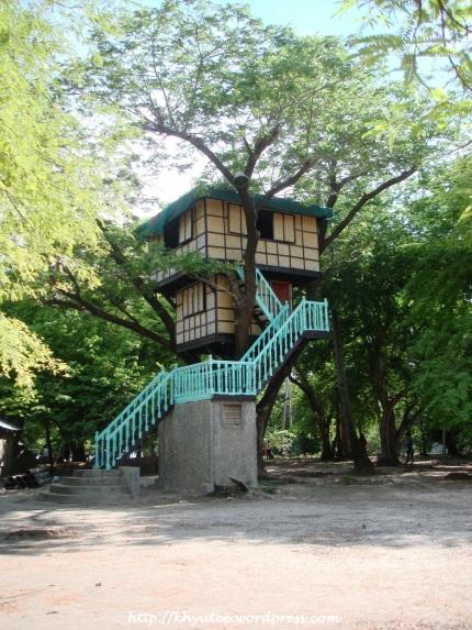 Potipot Island Tree Top