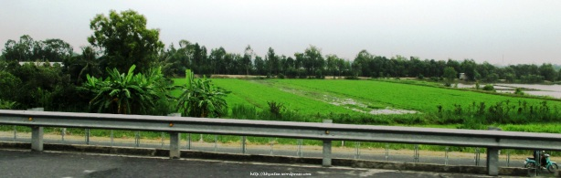 Vietnam Rice Fields3